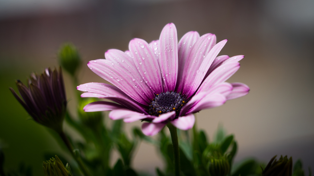 flower-sensitive_orig
